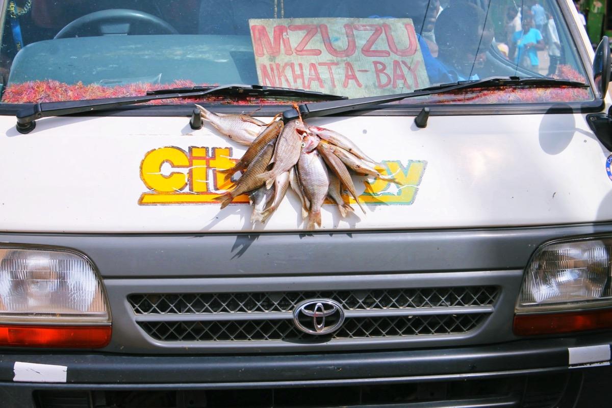 車で干物を作っているの図 @カタベイ